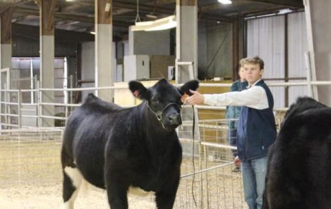 Billy Imhoff with his heifer during the cattle show.  (Pictures taken by former FFA member Kelsee Blackmon)